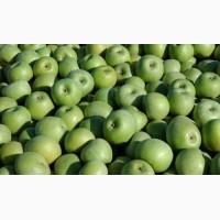 Яблоко от производителя урожай 2018 г