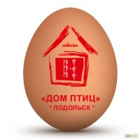 Прямые поставки инкубационного яйца Cobb-500 и Ross-308 из Польши, Чехии, Белоруссии
