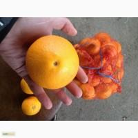 Апельсины Абхазия от 28 руб