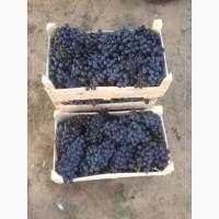Продам виноград столовый сорт Молдова