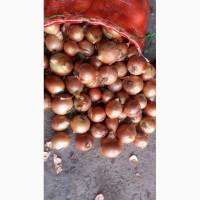 Продаем лук сорт Манас и Боско