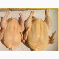 С доставкой мясо бройлерных цыплят и кур несушек