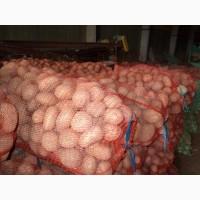 Картофель оптом от производителя (сбор 2018 года) разных сортов