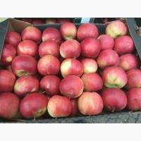 Реализуем оптовую продажу яблок Кримсон с доставкой по России