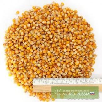 Фураж кукуруза