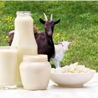 Творог, сыворотка и другие продукты из козьего молока