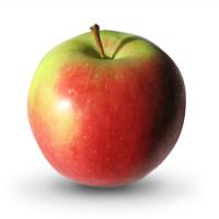 Яблоко садовое Северный синап, зимний сорт
