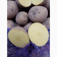 Продам картофель оптом со склада доставка