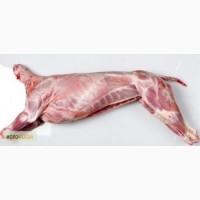 Продам козье мясо (тушу)