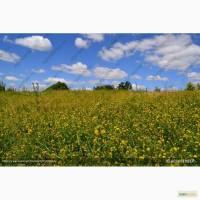 Продам Семена пастбищных и сенокосных трав
