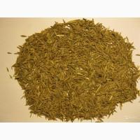 Семена костра (костёр)
