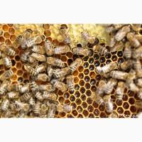 Пчелосемьи в ульях