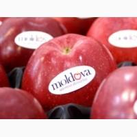 Яблоки Молдавские в России