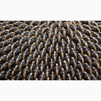 Семена подсолнечника НЕОМА от Syngenta