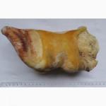 Продам путовый сустав говяжий (Белоруссия) - 55, 00 руб/кг