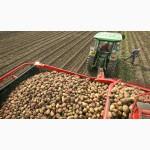 Картофель оптом Челябинск Гала
