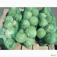 Продам капусту белокочанную свежую