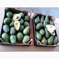 Авокадо из Марокко
