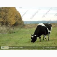 Продам Пастбищные и сенокосные травосмеси производства РФ