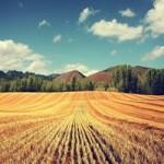 Продажа пшеницы 5 класса