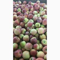 Яблоки 1 и 2 сорт оптом