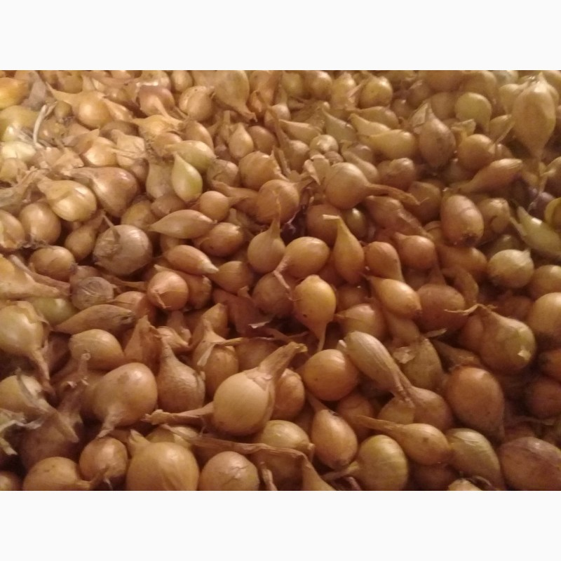 чувашский лук севок