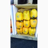 Продам цветной болгарский перец
