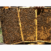Пчелопакеты Карпатка на сезон 2019