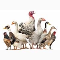 Принимаем заявки на выращивание птицы на 2020 год