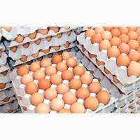 Яйцо куриное (загрязненка, промышленная переработка, с насечкой, некондиционное)