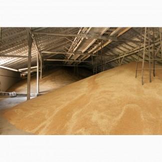 Продам пшеницу 4 класса 1500тонн Собственик