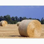 Солома пшеничная, овсяная, ячменная