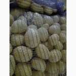 Картофель мытый оптом от производителя разных сортов