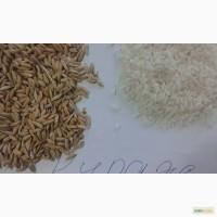 Рис-сырец оптом