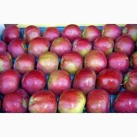 Продажа яблок