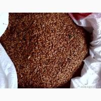 Лён масличный 500 тонн (Башкирия)