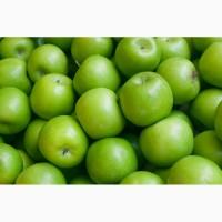 К оптовой продаже готовы яблоки сорта Муцу с доставкой по России