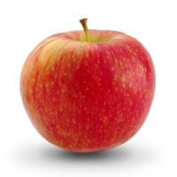 Яблоко садовое Мальт Багаевский, летний сорт