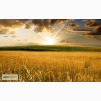 Продам Моноаммонийфосфат (МАФ)12:61:0 (кормовой)