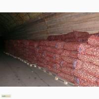 Картофель Брянск оптом со склада в Москве