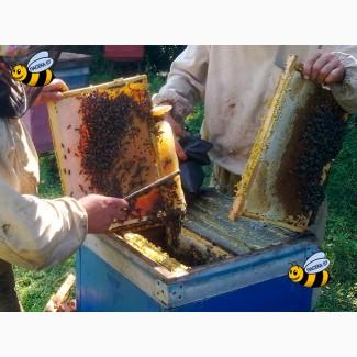 Пчелопакеты среднерусской породы пчел в Санкт-Петербурге