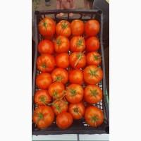 Продам свежие помидоры