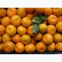 Продаем оптом мандарины Дубиш по цене от производителя