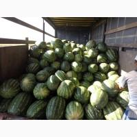Арбуз урожай 2019. большой объём, высокое качество