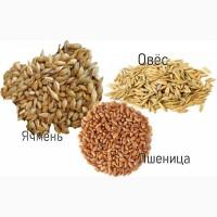 Пшеница, ячмень (оптовые закупки)