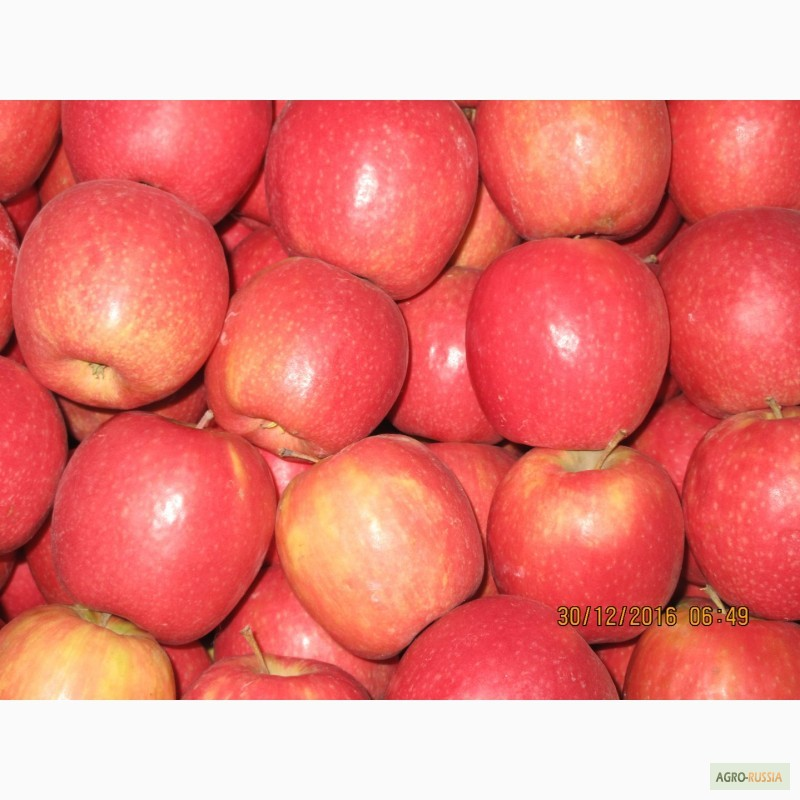 яблоки фото российские