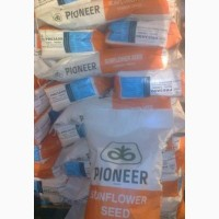 Гибрид подсолнечника П63ЛЕ10 ПИОНЕР / PIONEER (Express Sun)