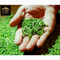 Продам маш зеленый (бобы мунг)