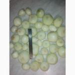 Продам лук очищенный, лук очищенный в вакуумной упаковке