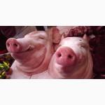 Голова свиная с языком и ушами